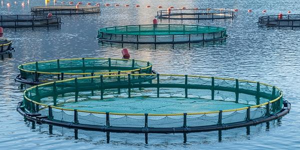 aquaculture smart monitoring